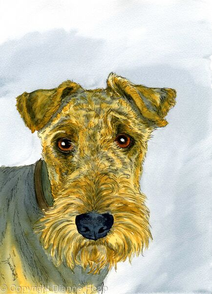 AIREDALE  No.6786 Terrier Dog Original