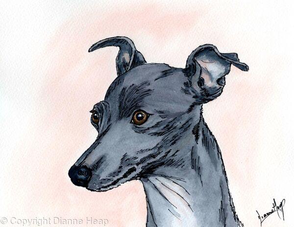 I'm Cutest No.6624 Original Italian Greyhound