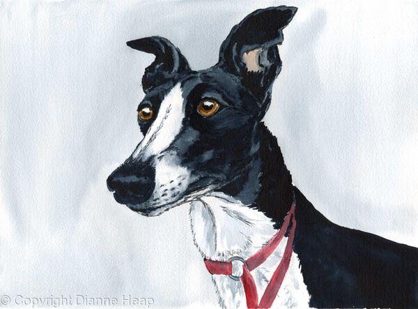Alert Hound No.5708 Greyhound Print