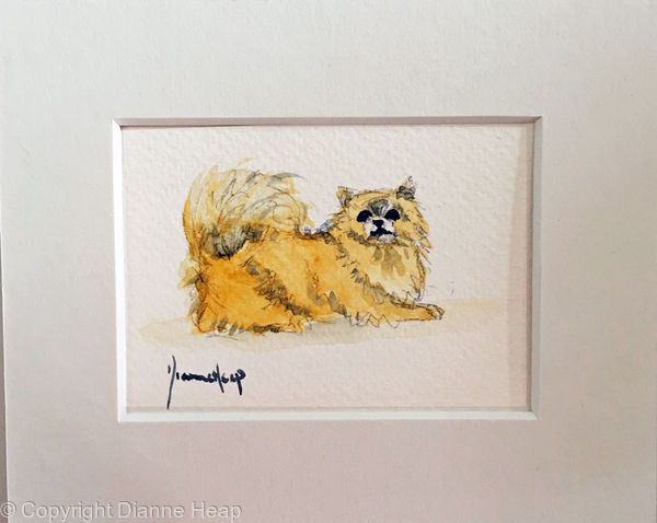 7214 ACEO Pomeranian Dog Original