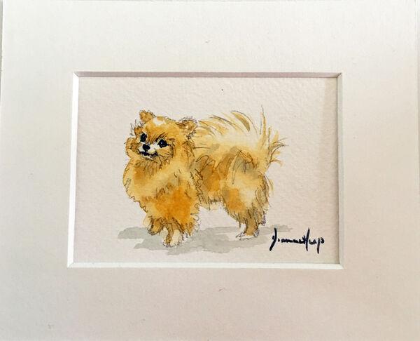 7215 ACEO Pomeranian Dog