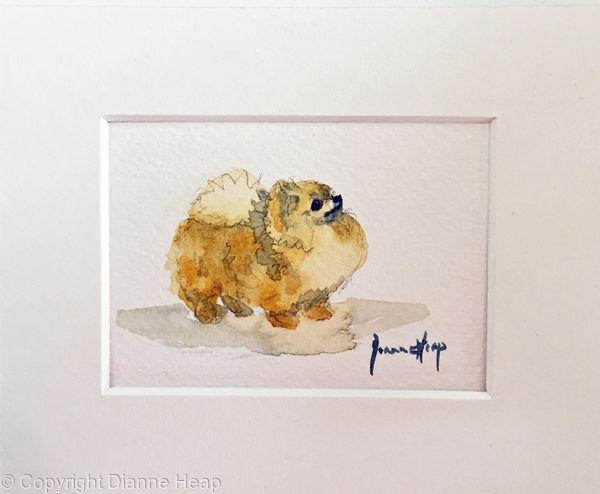 7216 ACEO Pomeranian Dog