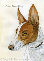 Alert No.7031 Podenco Dog Print