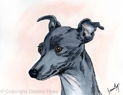 I'm Cutest No.6624 Original Italian Greyhound