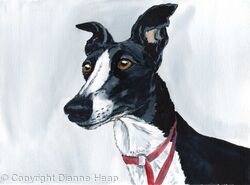 Alert Hound No.5708 Greyhound Print