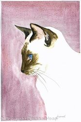 SIAMESE CAT No.3482