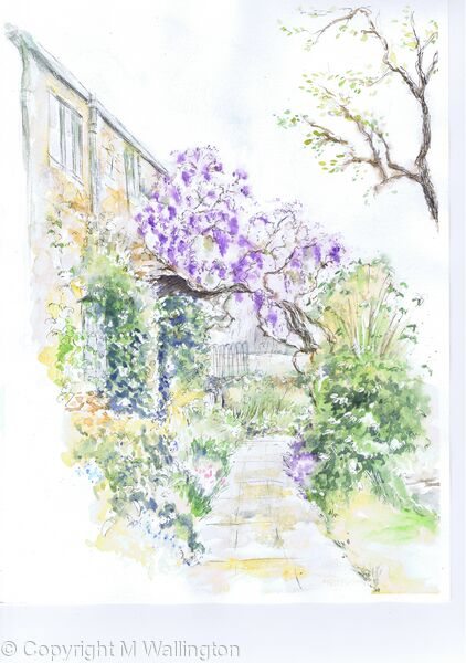Wisteria at Gaunt's Mill