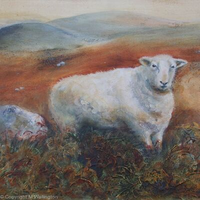 Moorland Sheep in the Bracken