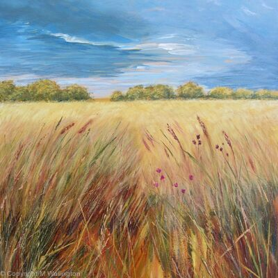 Dark Sky over Oxfordshire Field