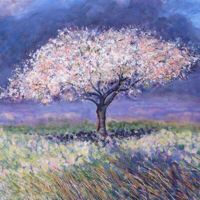 Cherry Tree in Spring,