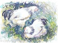 Two Hens in the Garden
