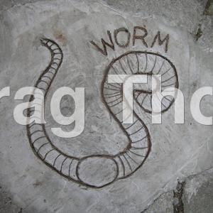 Cement drawing of worm in nursery school playground