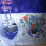 Blue, , nasturtiums, plant