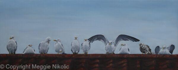 Guernsey seaguls