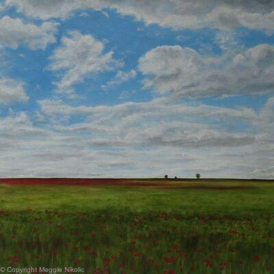 Poppies in Sandridge