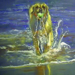 Sadie in the sea