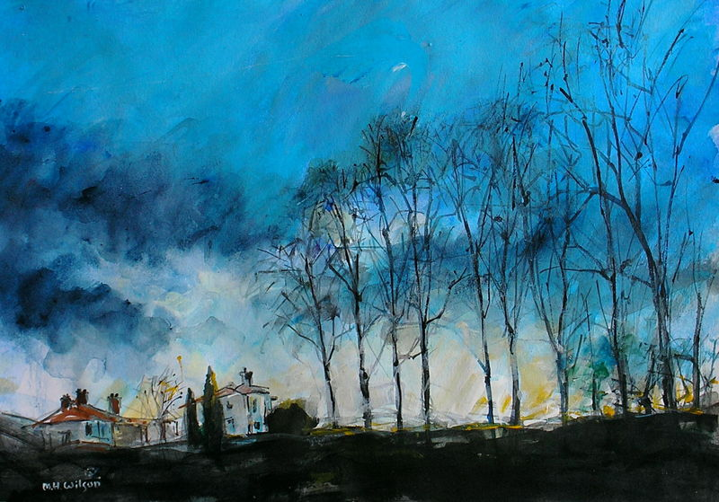 Winter Trees  Sunlight, Bingham Park, Sheffield