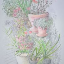 A Potted Collection  -  Beverley White