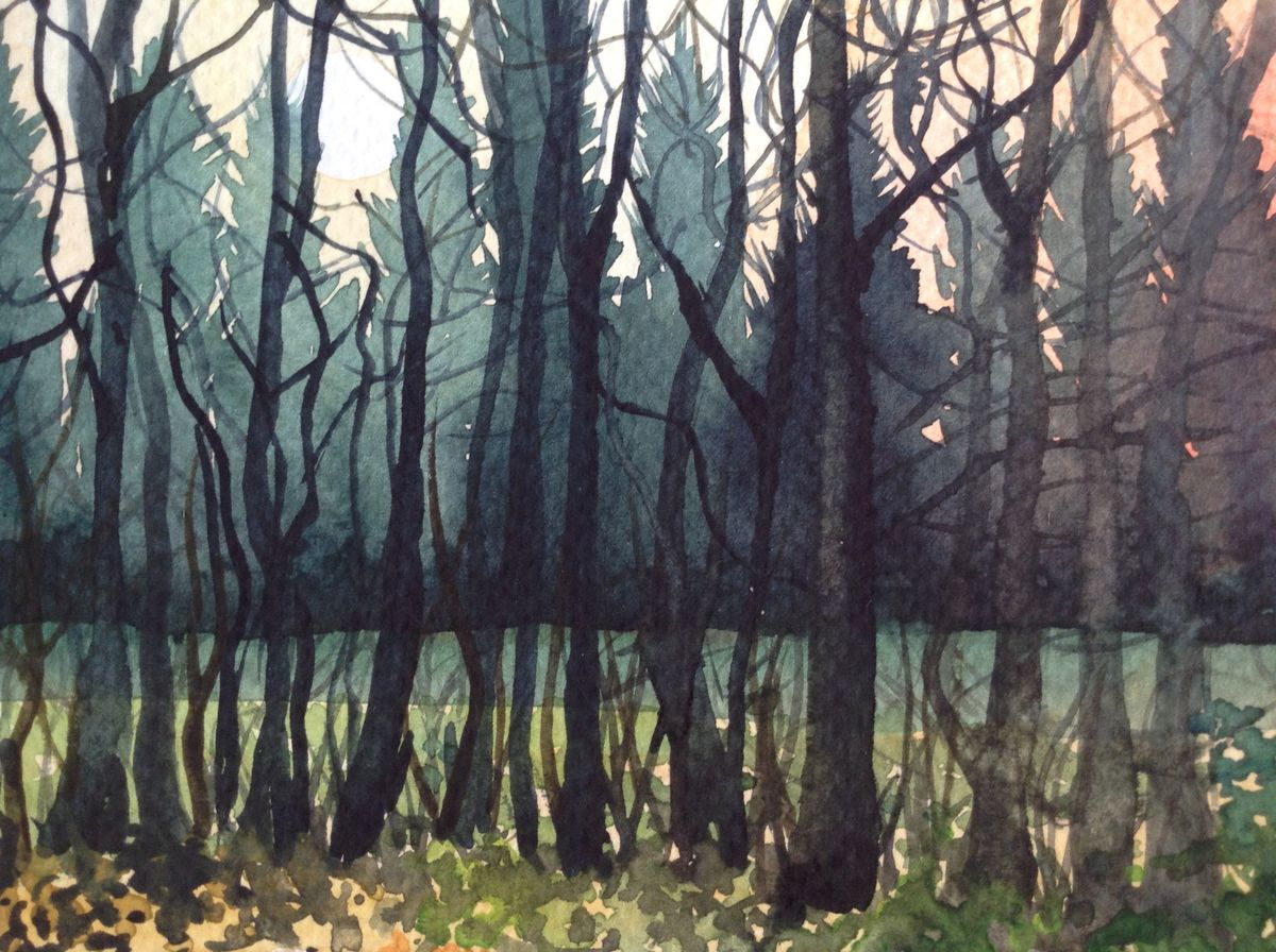 Stansted woods 2