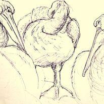 Dalmation Pelican Study