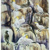 Gannets, Alderney