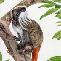 Bearded Monkey