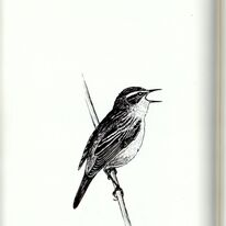Sedge Warbler - an illustration from the book Birdbook, Freshwater Habitats