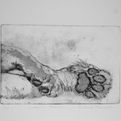 Lion's Paws
