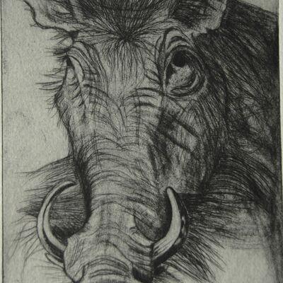 African Wild Boar