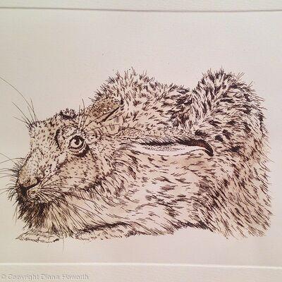 Hare Crouching