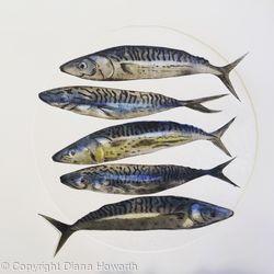 Five Mackerel