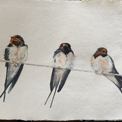 Swallows watercolour