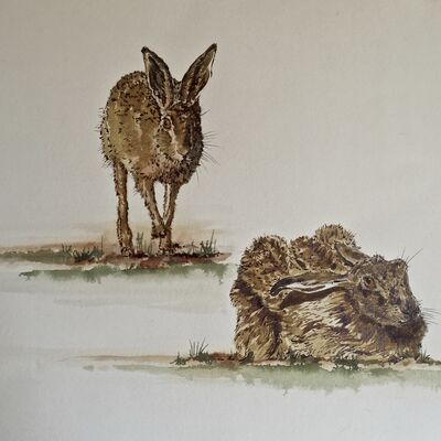 A Couple of Hares pen & ink