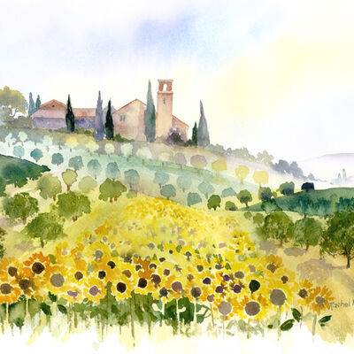 Sunflowers and Olive Groves