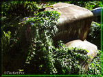Mount St. Helens Kenworth 2