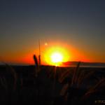 Loma sunset