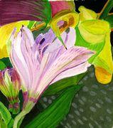 Lilac Alstroemeria
