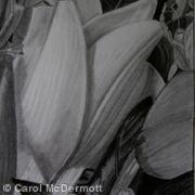 White lily I