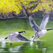 Something Told the Geese it was Time to Fly (Rachel Field)