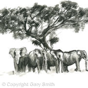 elephants shade