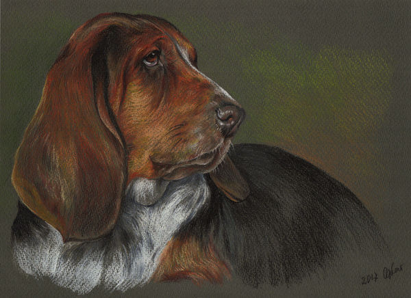 Basset Hound Portrait, Pet Painting, Dog Drawing, Animal Portrait, Dog Lovers. Pastel Portrait on colored paper.