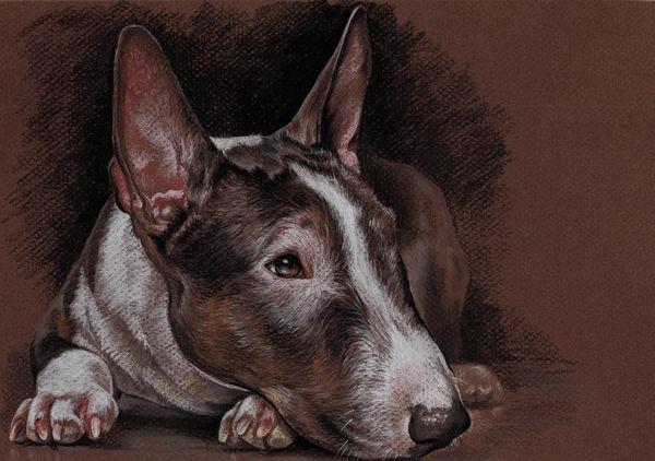 Bullterrier pet portrait Pet painting Dog drawing Animal portrait Dog lovers Original pastel portrait Personalized dog art