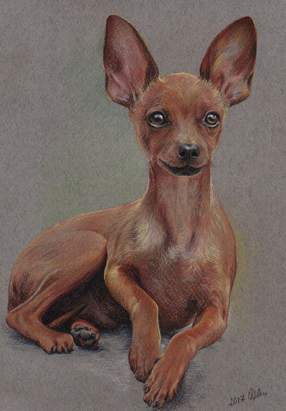 Realistic colorful pet portrait Russian toy terrier Pet painting Dog drawing Animal portrait Gift for Dog lovers Original pastel portrait Personalized dog art