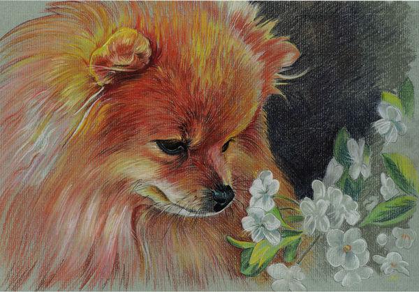 Realistic colorful pet portrait Pomeranian Spitz Pet painting Dog drawing Animal portrait Dog lovers Original pastel portrait Personalized dog art