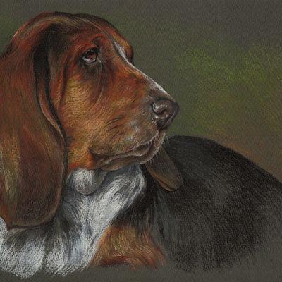 Basset Hound Portrait, Pet Painting, Dog Drawing, Animal Portrait, Dog Lovers. Pastel Portrait on colored paper.