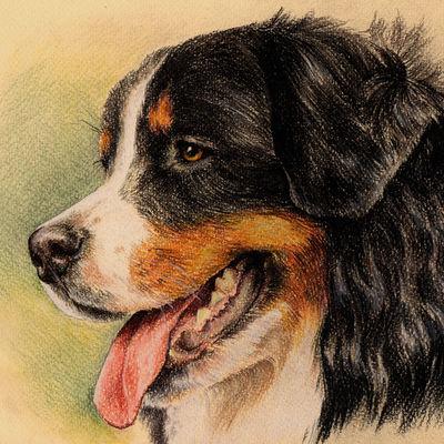 Berner Sennenhund Portrait, Pet Painting, Dog Drawing, Animal Portrait, Dog Lovers, Berner Sennenhund. Personalized pastel Portrait on colored paper.