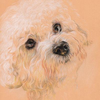 Bichon-Frise portrait Pet painting Dog drawing Animal portrait Dog lovers Original pastel portrait Personalized dog art