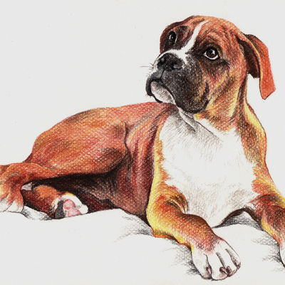 Boxer dog portrait Pet painting Dog drawing Animal portrait Dog lovers Original pastel portrait Personalized dog art