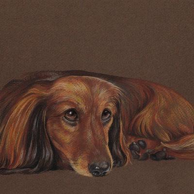 Custom pet portrait Pet painting Dog drawing Animal portrait longhaired dashchund Dog lovers Original pastel portrait Personalized dog art
