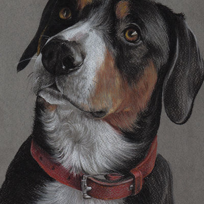 Custom pet portrait Pet painting Dog drawing Animal portrait Entlebuher sennenhund Dog lovers Original pastel portrait Personalized dog art
